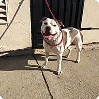 Adopt A Pet :: Tank - Sacramento, CA