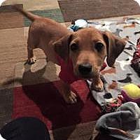 Adopt A Pet :: Dexter - Marlton, NJ