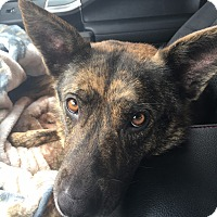 Adopt A Pet :: Tamsen - Portland, ME
