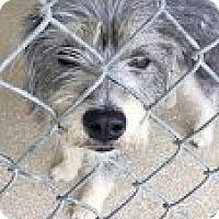 Adopt A Pet :: Chakra - Encinitas, CA