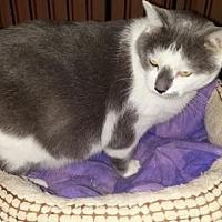 Adopt A Pet :: Talkin' Tom - Manchester, TN