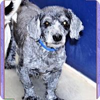 Adopt A Pet :: Andre - San Jacinto, CA