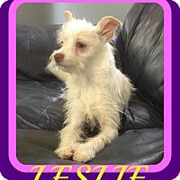 Adopt A Pet :: LESLIE - Jersey City, NJ