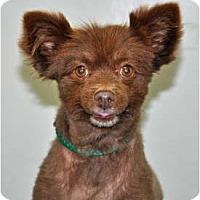 Adopt A Pet :: Dove - Port Washington, NY