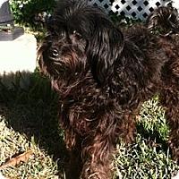 Adopt A Pet :: Annie - Crowley, LA