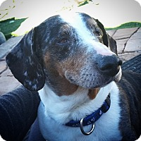 Adopt A Pet :: Mac - Henderson, NV