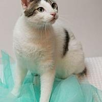 Adopt A Pet :: Emerson - Richardson, TX