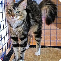 Adopt A Pet :: Maurice - Davis, CA