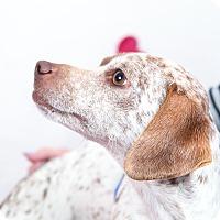 Adopt A Pet :: Robin Hood - Tehachapi, CA