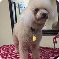Adopt A Pet :: PAPPY - Melbourne, FL
