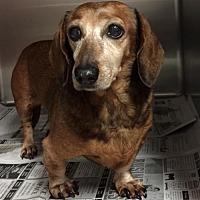 Adopt A Pet :: Lexie - Pearland, TX