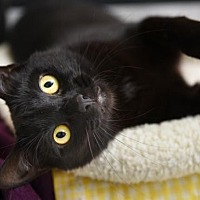 Adopt A Pet :: Lourdes - Chattanooga, TN