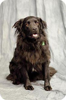Spaniel (Unknown Type) Mix Dog for adoption in Saskatoon, Saskatchewan - Abby