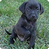 Adopt A Pet :: Axel - La Habra Heights, CA