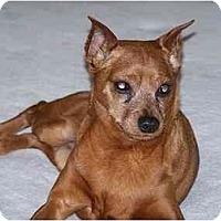 Adopt A Pet :: Fireball - Nashville, TN