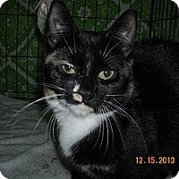 Adopt A Pet :: Twilight - Riverside, RI