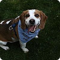 Adopt A Pet :: Bones - Wilmette, IL