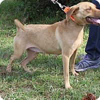 Adopt A Pet :: Sunshine - Sylvania, GA