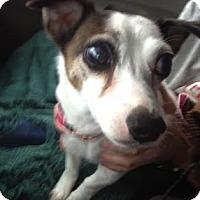 Adopt A Pet :: Dallas - Toledo, OH
