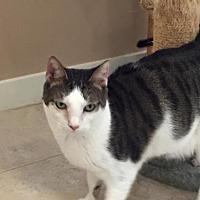 Adopt A Pet :: Fergie - Hilton Head, SC
