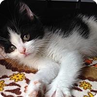 Adopt A Pet :: Messina - East Brunswick, NJ