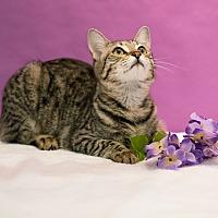 Adopt A Pet :: Keanu - Houston, TX