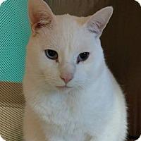 Adopt A Pet :: George - Brookings, SD