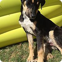Adopt A Pet :: JAKE - Dallas, TX