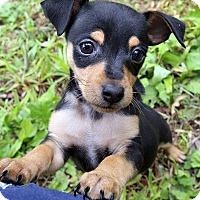 Adopt A Pet :: Kookie~adopted! - Glastonbury, CT