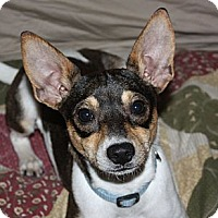 Adopt A Pet :: Waylon-PENDING-in New England - kennebunkport, ME