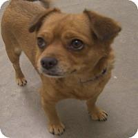 Adopt A Pet :: Brynn - Phoenix, AZ