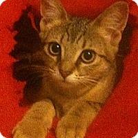 Adopt A Pet :: Primrose - Sterling Hgts, MI