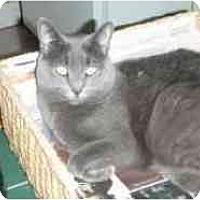 Adopt A Pet :: Babette - Pasadena, CA