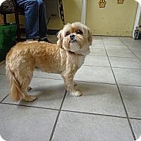 Adopt A Pet :: Roxy - Crawfordville, FL