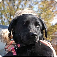 Adopt A Pet :: Jellybean - Cumming, GA