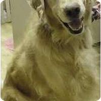 Adopt A Pet :: Harris - Fort Hunter, NY