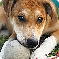 Adopt A Pet :: Ashland - Austin, TX
