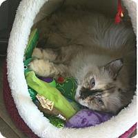 Adopt A Pet :: Darla - Edmonton, AB