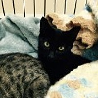 Adopt A Pet :: Marcie - Livonia, MI