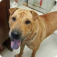 Adopt A Pet :: Peaches in OK - Mira Loma, CA