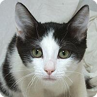 Adopt A Pet :: Jamie V - Sacramento, CA