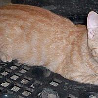 Adopt A Pet :: Morris - Morriston, FL