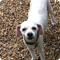 Adopt A Pet :: Edlum - MEET ME - Norwalk, CT