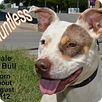 Adopt A Pet :: Dauntless - Richmond, MO