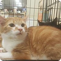 Adopt A Pet :: Remi - Griffin, GA