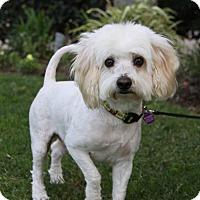 Adopt A Pet :: HENRY - Newport Beach, CA