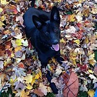 Adopt A Pet :: Onyx - Woodstock, ON