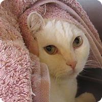 Adopt A Pet :: Quinnie - Sierra Vista, AZ