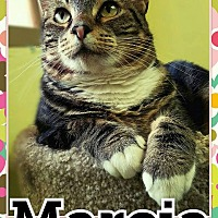 Adopt A Pet :: Marcia - Edwards AFB, CA