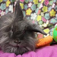 Adopt A Pet :: Beatrice - Erie, PA